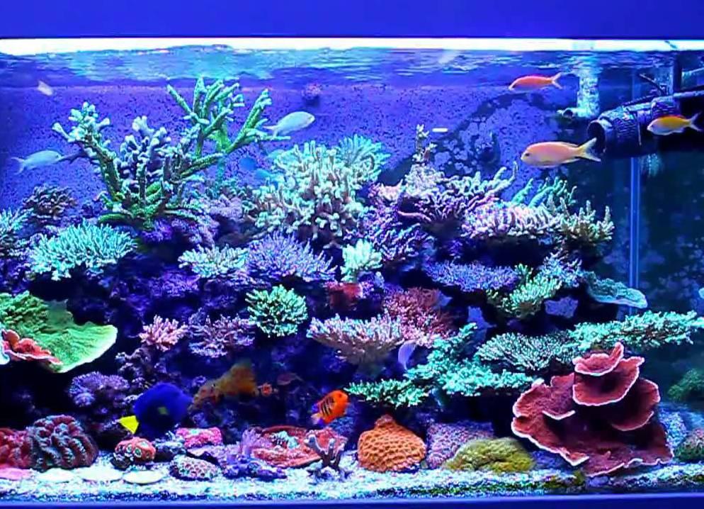morskoy_akvarium