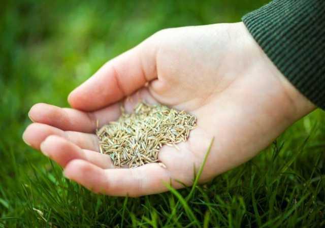 Травосмеси для озеленения города